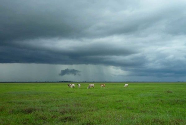 Stormcloud With Cows