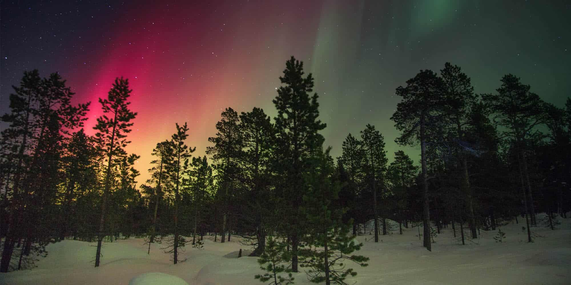 Trees and the Northern Lights
