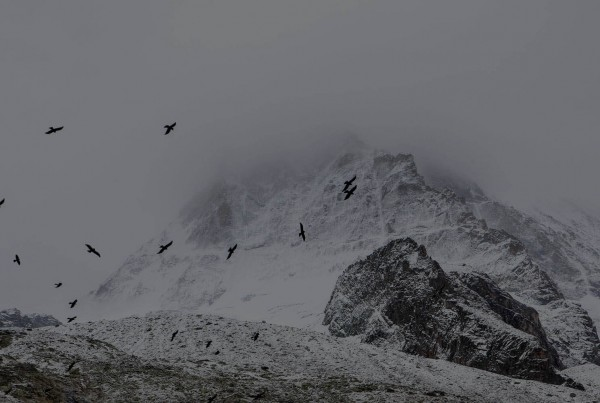 Snowy mountain with birds