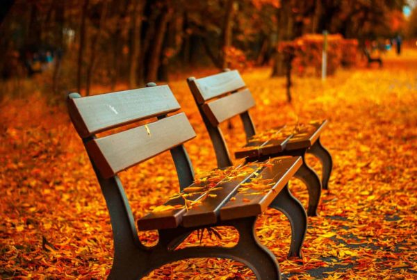 two boise benches covered in the fall leaves